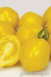 Bilde av Tomat, Drivhus- 'Lemon Tree'