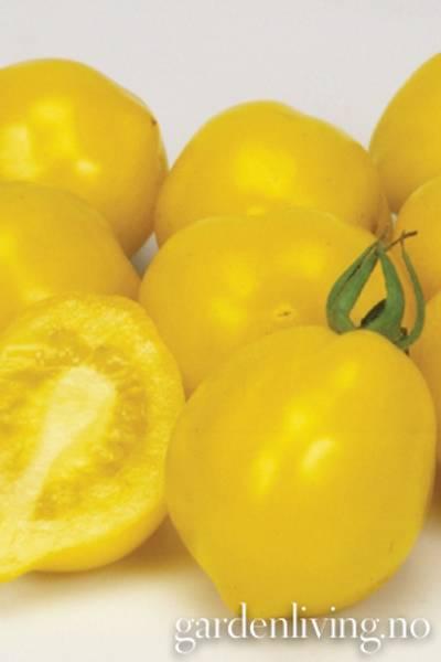 Tomat, Drivhus- 'Lemon Tree'