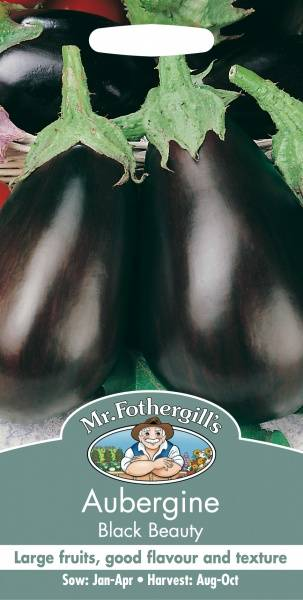 Aubergine 'Black Beauty' - Solanum melongena