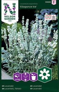 Bilde av Lavendel 'Ellagance Ice' - Lavandula angustifolia