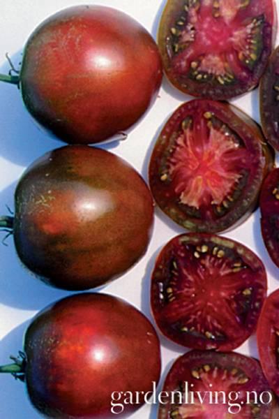 Tomat, Drivhus- 'Russian Black'