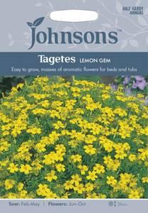 Bilde av Fløyelsblomst 'Lemon Gem', signet - Tagetes tenuifolia