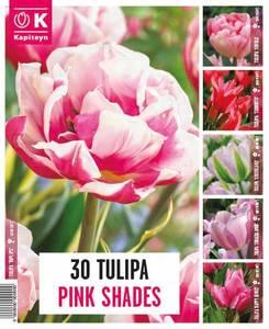 Bilde av Tulipaner Pink Shades - 30 løk