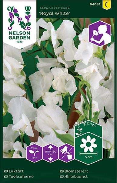 Blomsterert 'Royal White' - Lathyrus odoratus
