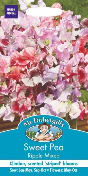 Blomsterert 'Ripple Mixed' - Lathyrus odoratus
