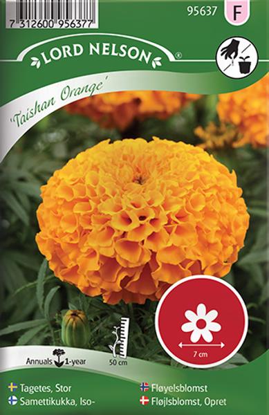 Fløyelsblomst 'Taishan Orange' - Tagetes erecta