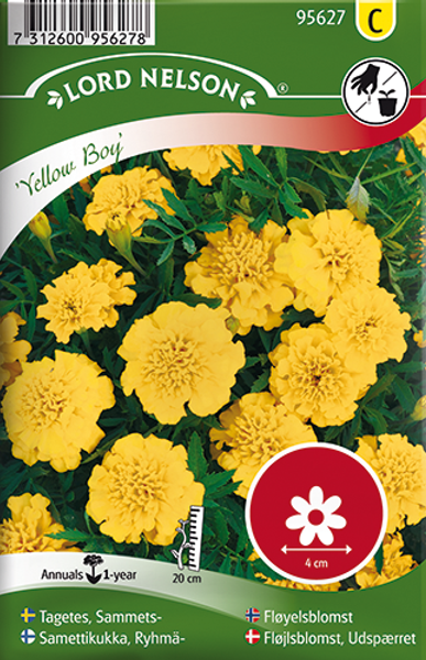 Fløyelsblomst 'Yellow Boy' - Tagetes patula