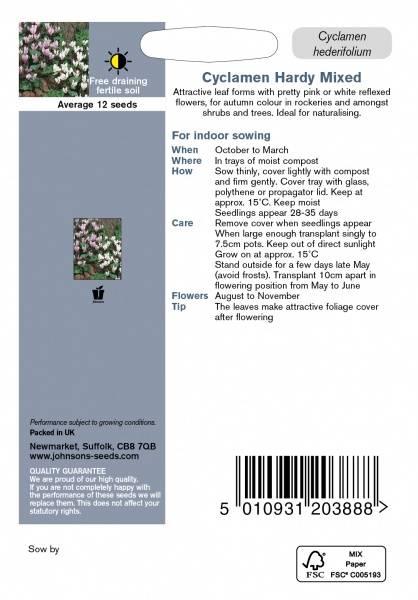 Alpefiol - Cyclamen hederifolium