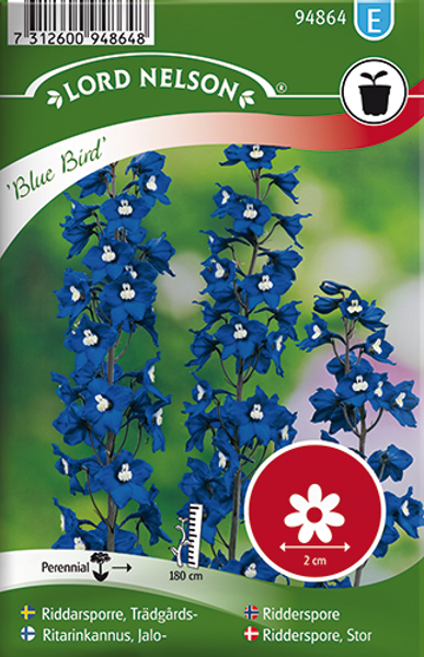 Ridderspore 'Blue Bird' - Delphinium