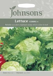 Bilde av Salat, Isberg- 'Iceberg 4' - lactuca