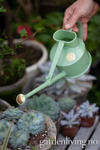 Bilde av Vannkanne, Haws mini - plast, lysgrønn