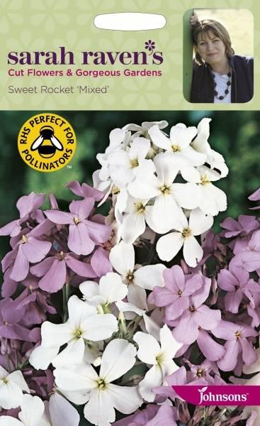 Dagfiol - Hesperis matronalis 'Mixed'