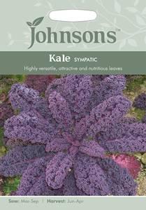 Bilde av Grønnkål 'Sympatic' - Brassica oleracea