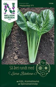 Bilde av Komatsuna 'Malachai' F1 - Brassica rapa