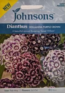 Bilde av Nellik, busk 'Hollandia Purple Crown' - Dianthus barbatus