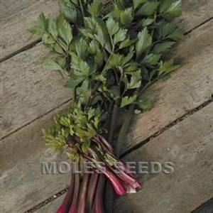 Bilde av Selleri - stilk 'Red Soup' - Apium graveolens